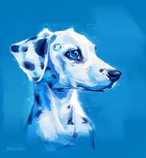 Puppy of a dalmatian