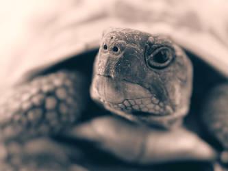 Tortoise by fridgenthegarden