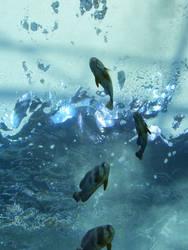 Swim thru Chrystal by livinski