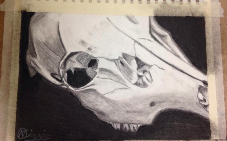 Skull Still life by nizzie12