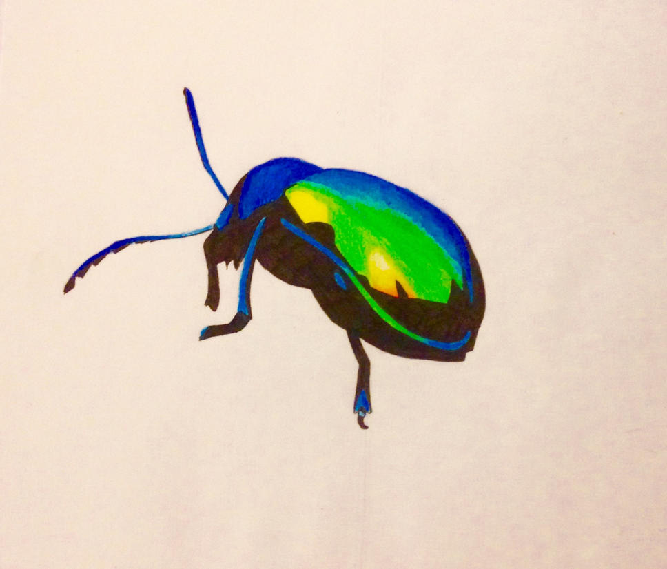 Rainbow Beetle by nizzie12