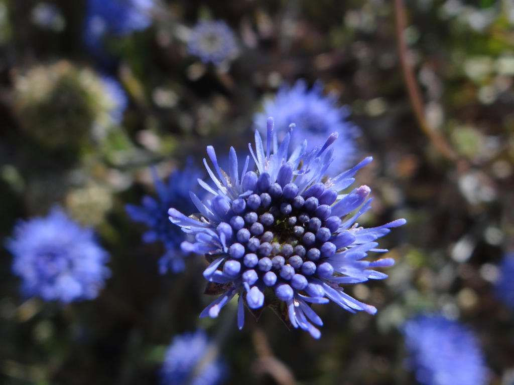 Blue by Korventem