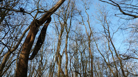 Walk in the Woods- Feb 2016- Trees by andynortonuk