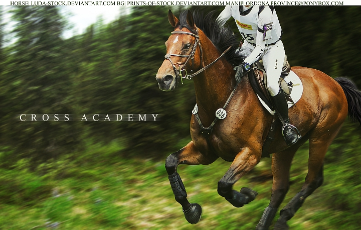 Cross Academy Horse Pic by TofuOnDaMenu
