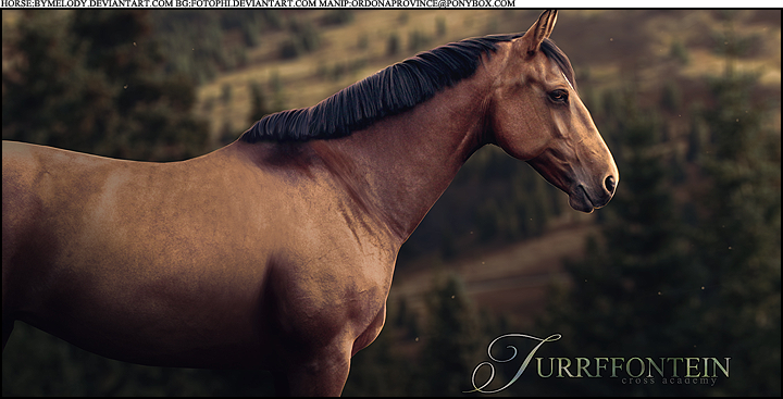 Turrffontein Custom Horse Picture by TofuOnDaMenu