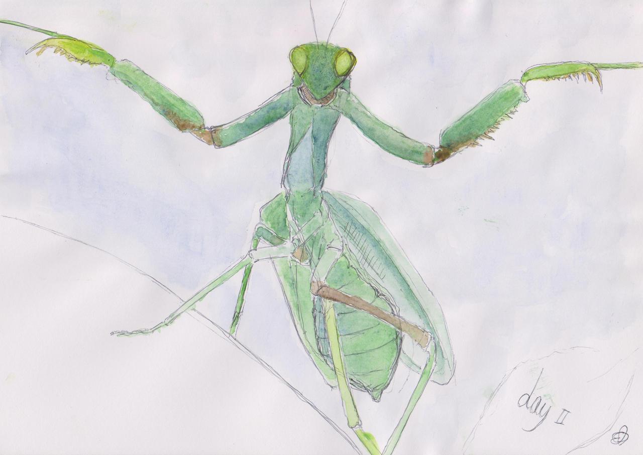 Praying Mantis by TofuXpress