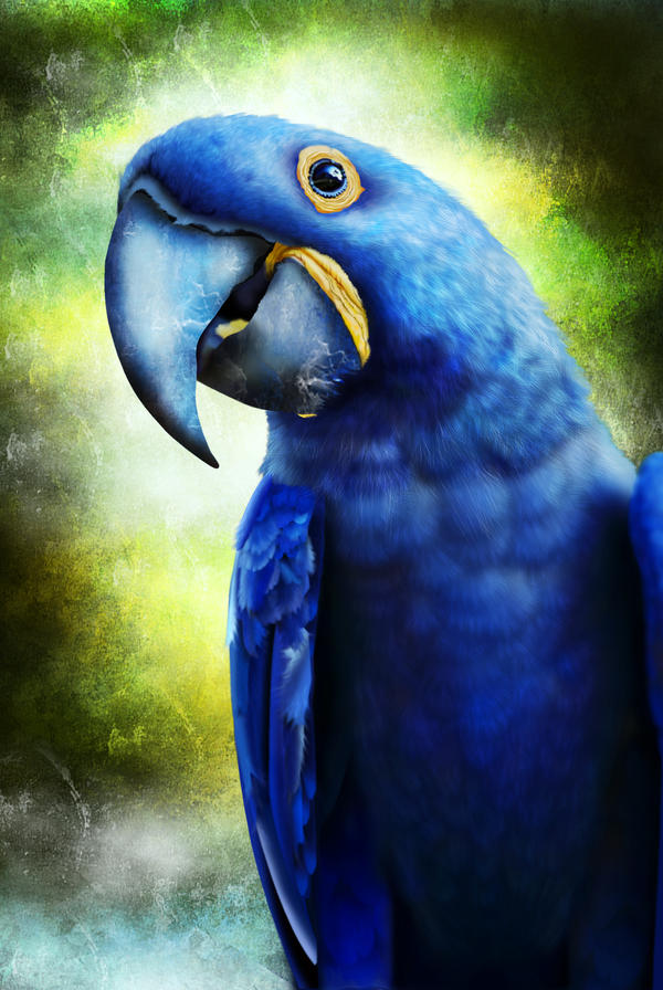 Hyacinth Macaw by doormouse1960