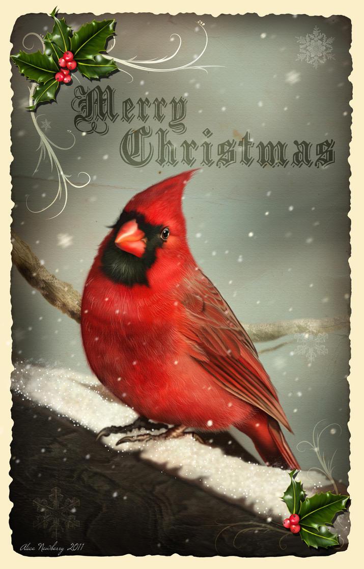 2ed7f1a584a Cardinal Christmas card design by doormouse1960 on DeviantArt ...