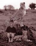 Safari I by Angels-Fury