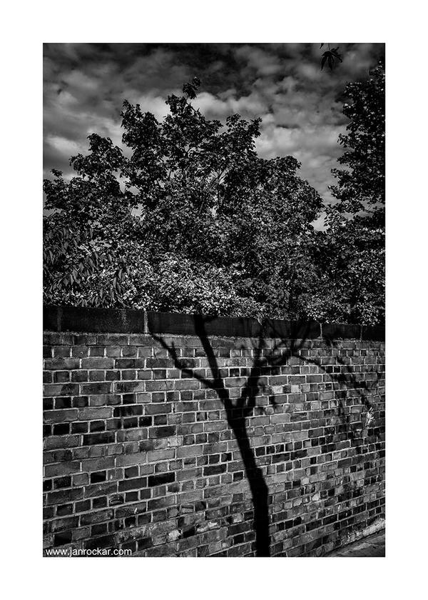 tree by lightdrafter