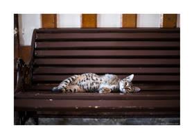lazy afternoon by jrockar