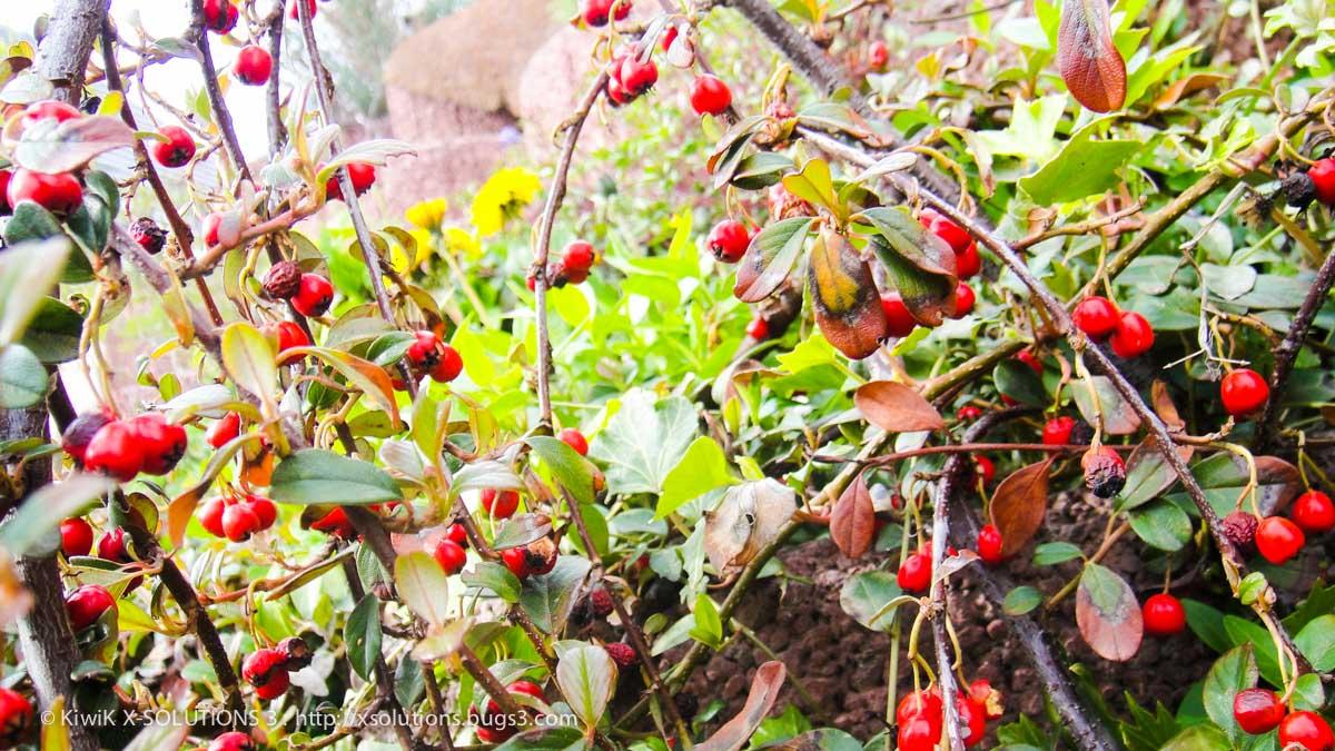 Bourgeons et fleurs rouges nature alsace 00483 by kiwik2010 on deviantart - Initiatives fleurs et nature ...