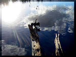 Lense Flare on Nepean River