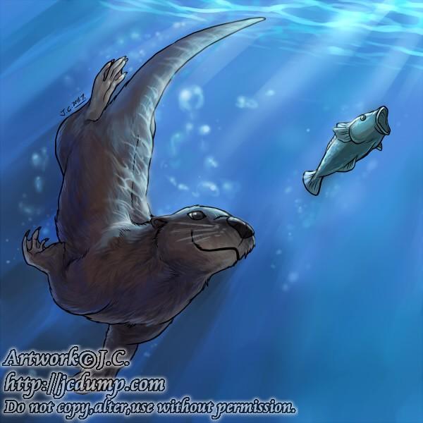72b5cb037 Swimming otter by J-C on DeviantArt