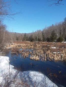 wetland  by countryangel93