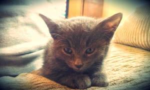 Few week old Kitten