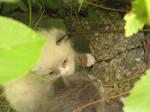 Little Lost Kittens