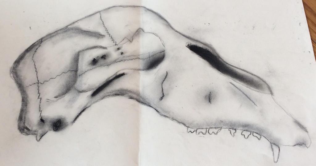 Skull by NaTabhairSuas