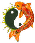 Yin-Yang Koi Tattoo