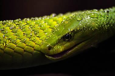 Green Mamba by Mytrokos