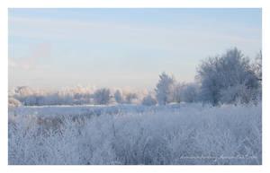 Winter day I by Domino-Harvey
