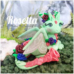 Rosetta the Rose Fairy Dragon