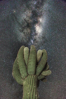 Cactus and the stars