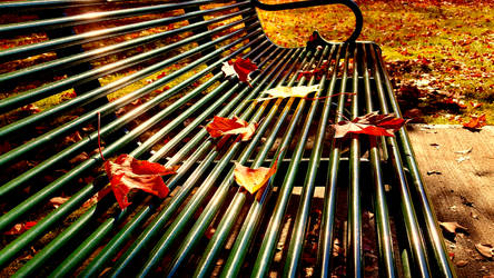 Fall 2018 - Corbin Park - Leaves on a Bench by Ryven