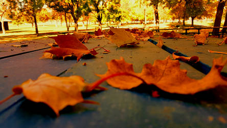 Fall 2018 - Franklin Park - Leaves on a Table by Ryven