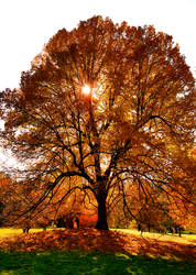 Fall 2018 - Finch Arboretum - Tree On A Hill by Ryven