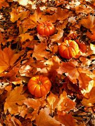 Fall 2018 - Finch Arboretum - Mini Pumpkins by Ryven