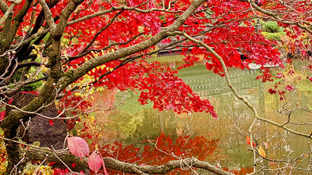 Fall 2018 - Manito Japanese Gardens - Maple Boughs by Ryven