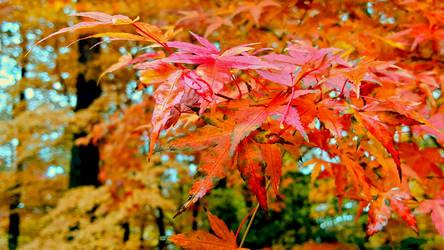 Fall 2018 - Japanese Gardens Manito - Orange Stars by Ryven