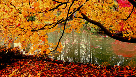 Fall 2018 - Manito Japanese Gardens - Over Pond by Ryven
