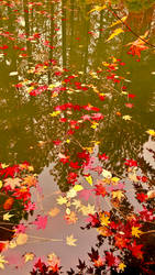 Fall 2018 - Japanese Gardens Manito - Water Stars by Ryven