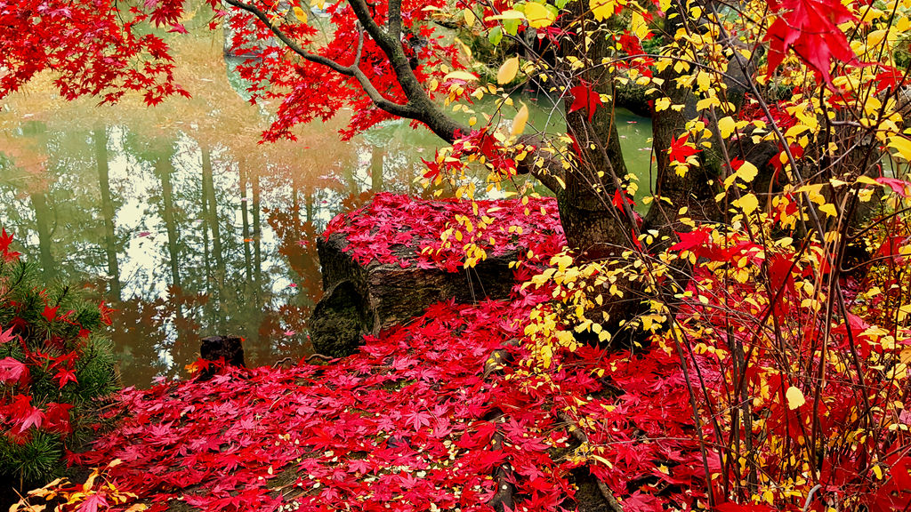 Fall 2018 - Japanese Gardens Manito - Red Blanket by Ryven