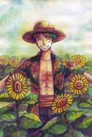 OP: Sunny Luffy by LiniAriva