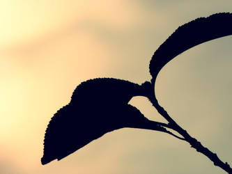 Leaves. by FadedIntoTheNight