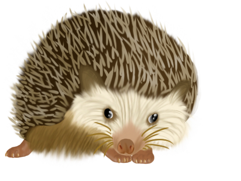 Realistic hedgehog by TheMunchbot on DeviantArt