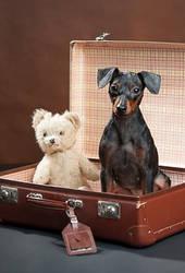 Dog-On Vacation!!