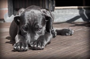 Submissive Doggos Dog!