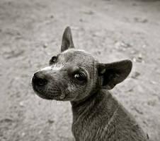 Doggos Doggie!! by Dog-Lovers--Club