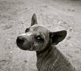 Doggos Doggie!!