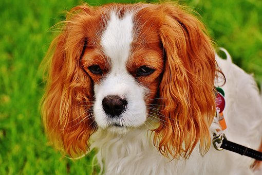 Doggie Dog!