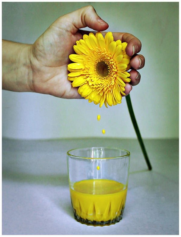 Gerbera Juice by chabruphotography
