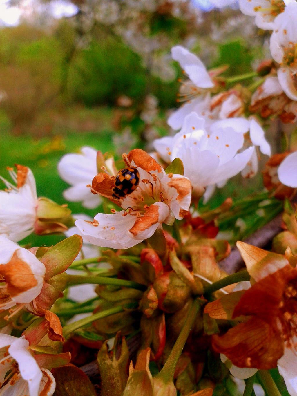 black ladybug by miawell1990