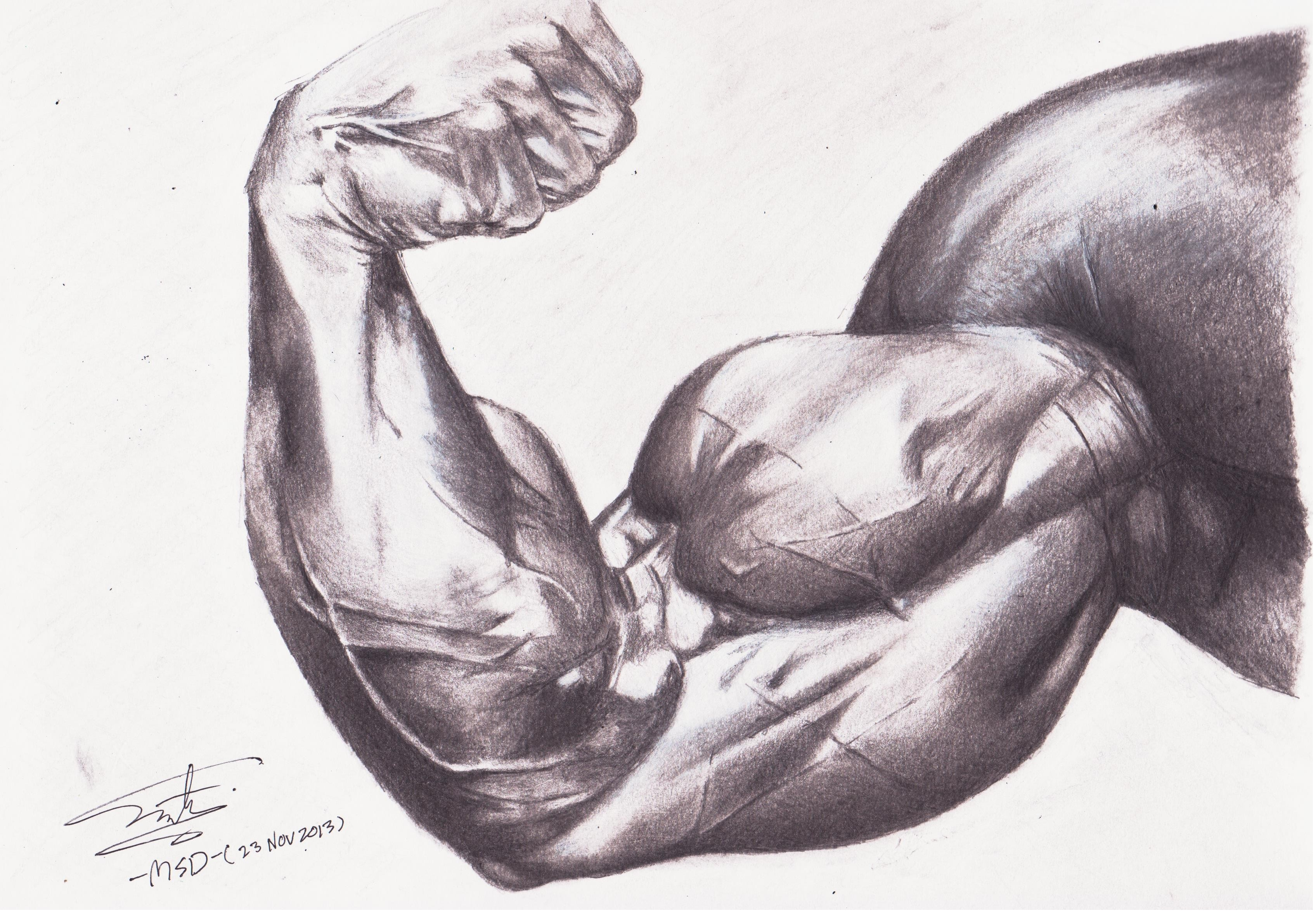 Biceps Muscle Drawing by ShahmiMSD on DeviantArt