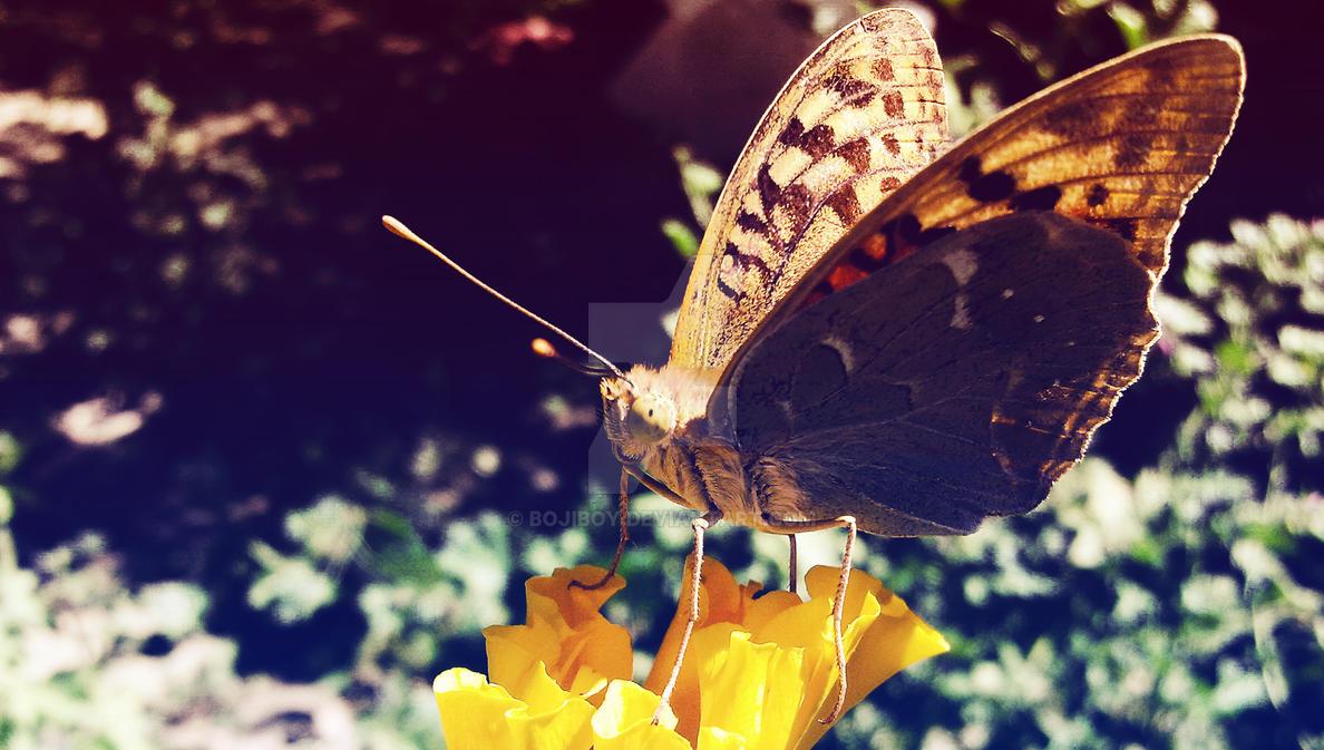My Captured-butterfly-bojiboy by bojiboy
