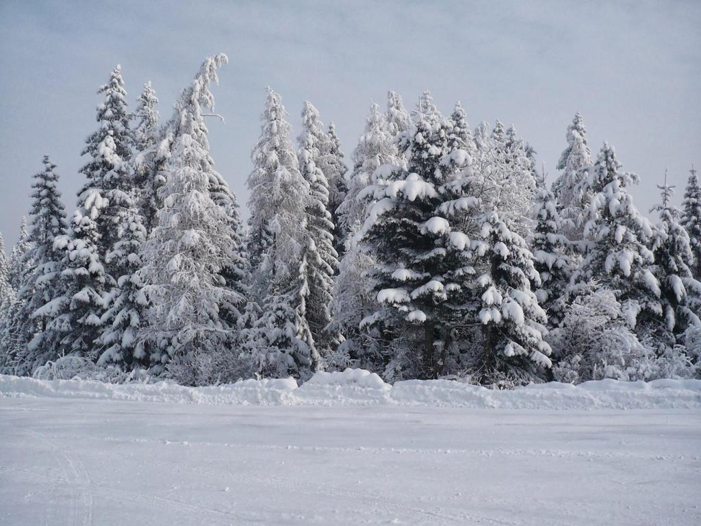 winter landscape by AlanCrazy