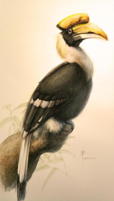 Hornbill Drawing Pencil